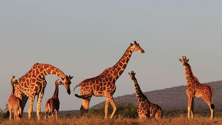 راهنمای کامل سفر به آفریقا