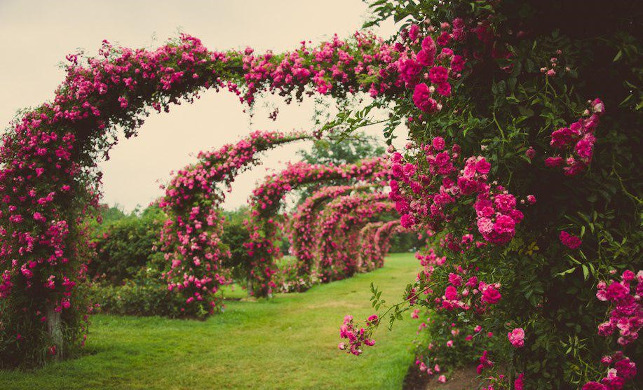 باغ گل رز برن