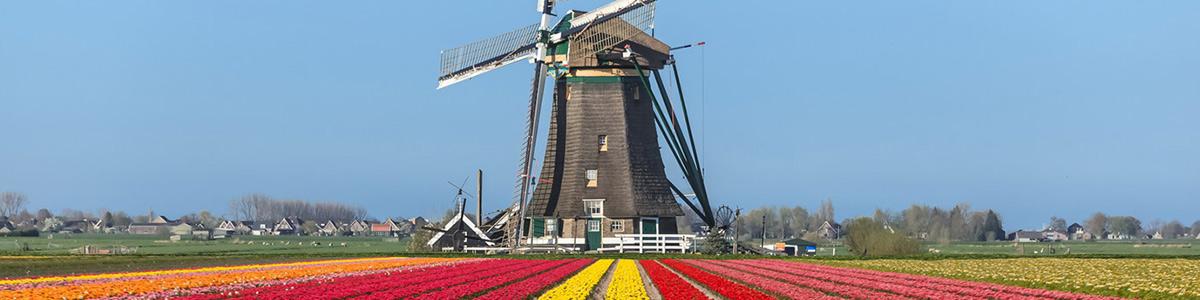 دشتی پر گل در کشور هلند