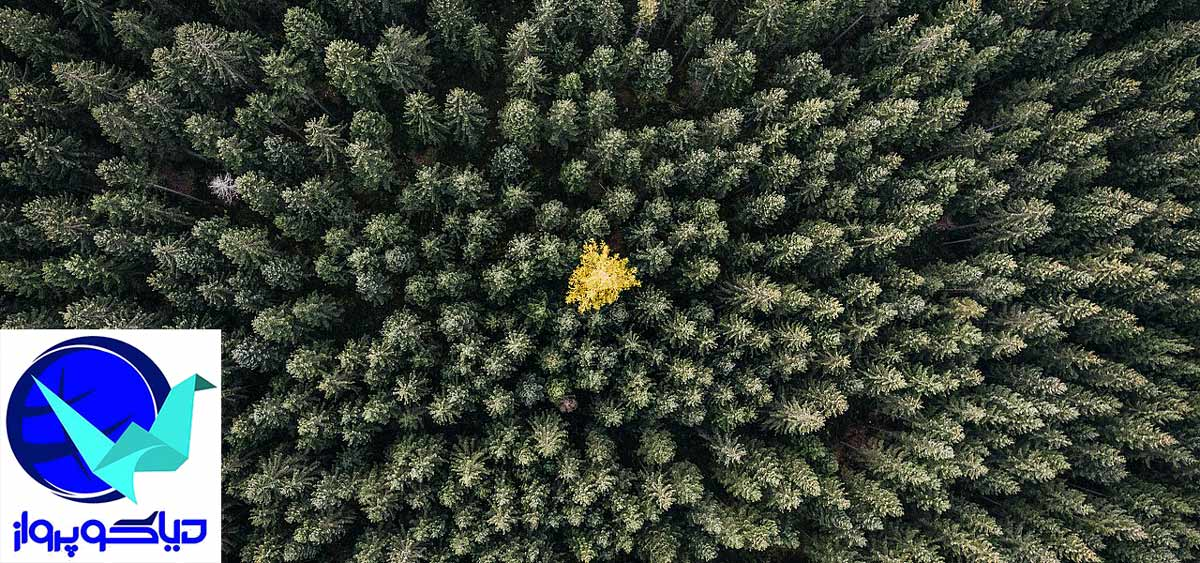 جنگل های زیبای اتریش