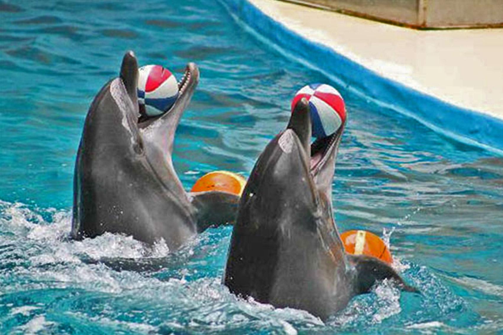 نمایی زیبا از نمایش دلفین ها در دلفیناریوم کیش
